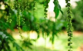 Картинка цветок, листья, цветы, зеленый, фон, дерево, widescreen, обои, размытие, wallpaper, цветочки, широкоформатные, background, полноэкранные, HD …