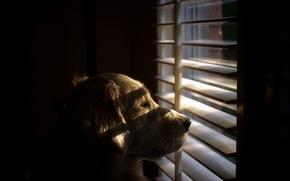Картинка взгляд, друг, собака, окно