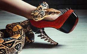 Картинка змея, шипы, каблуки, ножка, туфля