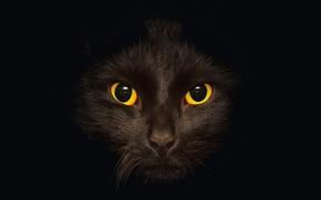 Обои темный, кот, черный, черная, глаза, черное, фон, кошка