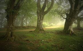 Картинка лес, деревья, туман, тропа, Испания, Zapitor, Navarre