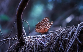 Картинка лес, природа, дерево, Бабочка