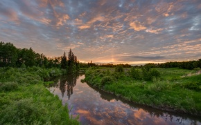 Картинка трава, вода, природа, Jeff Wallace