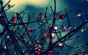 Обои листья, макро, деревья, цветы, ветки, фон, дерево, розовый, widescreen, обои, wallpaper, цветочки, широкоформатные, background, боке, ...