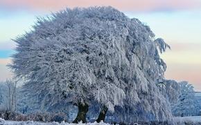 Обои зима, иней, небо, облака, природа, дерево