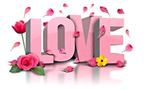 Картинка цветок, любовь, цветы, роза, Love, тюльпан, лепестки, flowers