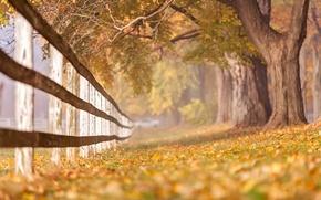 Картинка осень, природа, забор