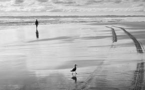Картинка море, птица, человек