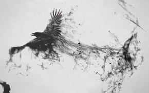 Картинка птица, черный, след, ворон