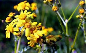 Картинка поле, фиолетовый, цветы, желтый, зеленый, сад