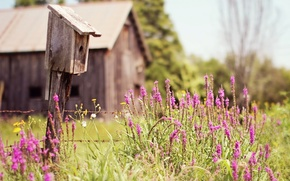 Картинка лето, трава, деревья, цветы, природа, дом, скворечник, хижина, полевые