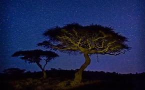 Обои Африка, свет, Кения, акация, Wildlife Conservancy, дерево, ночь, звезды