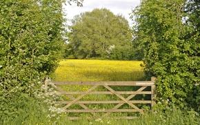 Картинка деревья, цветы, ворота, луг
