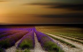 Картинка цветы, природа, Франция, лаванда, поле, Прованс, небо, закат