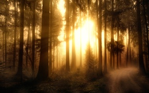 Картинка лес, обработка, Misty Forest-2