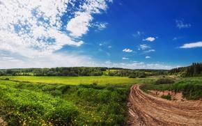 Картинка зелень, поле, лето, небо, Природа, дорожка, summer, sky, nature, scenery, path