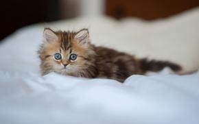 Картинка взгляд, котёнок, Daisy, © Benjamin Torode