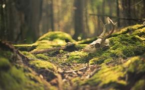 Картинка лес, макро, блики, череп, мох