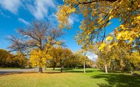 Обои дорога, осень, небо, трава, листья, деревья, парк, скамья