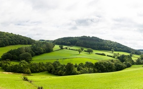 Картинка зелень, лес, облака, деревья, холмы, панорама