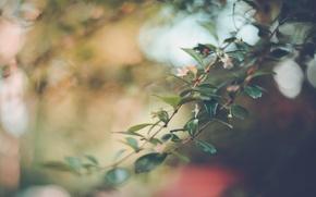 Картинка листья, цветы, ветка