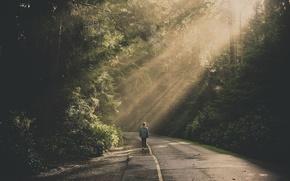 Картинка дорога, лес, ветки, человек