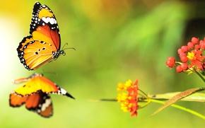 Картинка цвета, бабочки, цветы, яркие