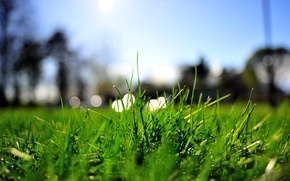 Картинка зелень, лето, трава, макро, огни, газон, лужайка