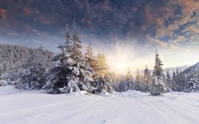 Картинка зима, лес, солнце, снег, рассвет, ёлки