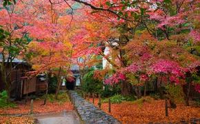 Обои листья, Япония, дорожка, деревья, сад, дом, осень