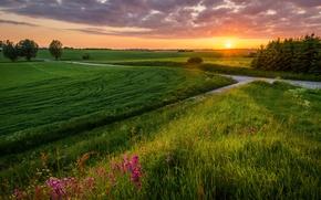 Картинка дорога, поле, лето, пейзаж, закат
