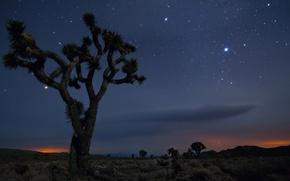 Картинка Песок, Дерево, Ночь, Пустыня, Мексика, Калифорния, США, Звёзды, Joshua Tree National Park