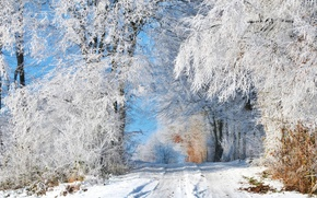Картинка зима, дорога, снег, деревья