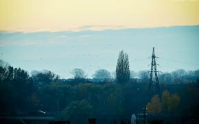 Картинка птицы, город, вечер, Осень, мрачно