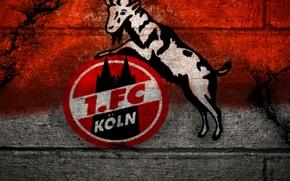 Картинка wallpaper, sport, logo, football, 1. FC Koln