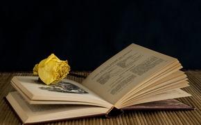 Картинка фон, роза, книга
