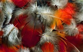 Обои цвет, перья, пух