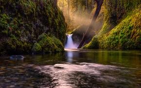 Картинка лес, деревья, природа, озеро, река, водопад