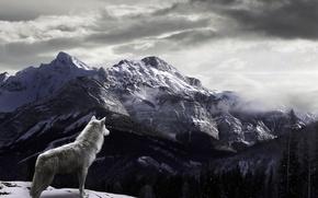 Картинка снег, горы, туман, Волк