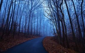 Картинка утро, туман, дорога, деревья, листья, Лес, рассвет, синий, осень