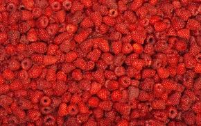 Обои малина, много, ягода