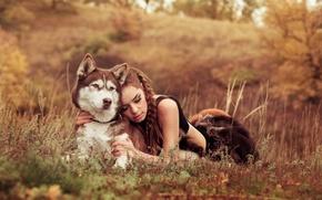 Картинка поле, природа, Девушка, собака, друзья