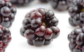 Обои ягоды, ежевика, blackberries, аппетитно