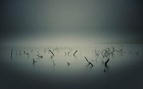 Картинка ветки, корни, туман, болото