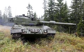 Картинка лес, трава, танк, боевой, бронетехника, Leopard 2 A4