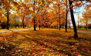 Картинка осень, деревья, красно-жёлтые листья, городской парк