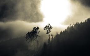 Обои лес, деревья, туман, холмы, дымка