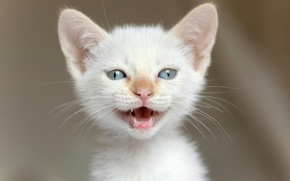 Картинка глаза, взгляд, мордочка, котёнок