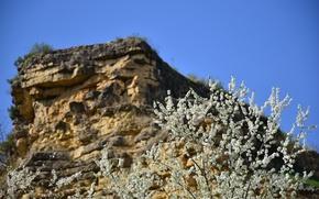 Картинка цветы, скала, дерево, Кисловодск