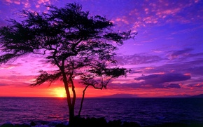 Картинка sea, sunset, tree, beautiful scenery